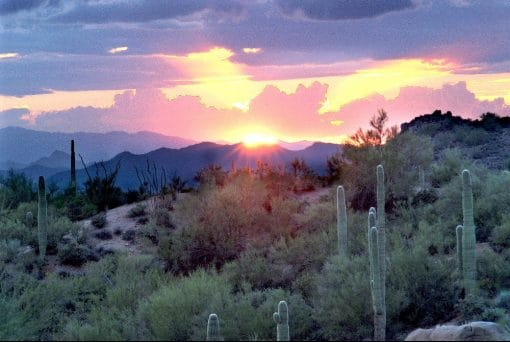 Ørkenlandskab i Arizona