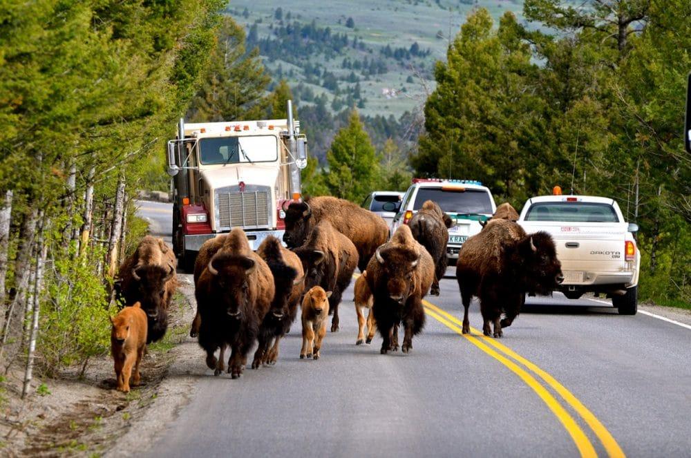 Autocampers i USA og Canada. På en rejse i autocamper kommer du helt tæt på naturen.