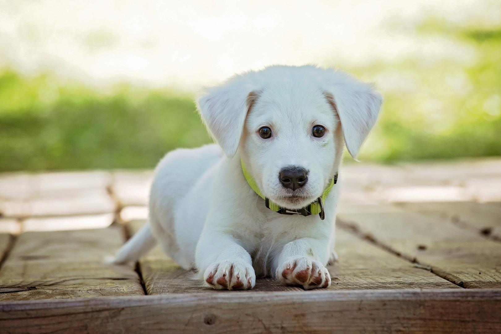 hund i autocamper